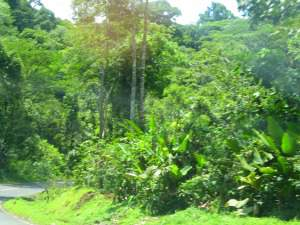 discover costa rica with our green season discount